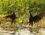 Birds taken with the Tamron 150-600mmlens