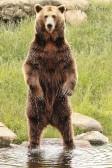 This bear is huge!