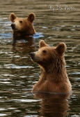 Bathing time for baby bears