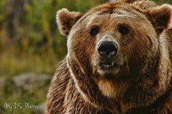 Very majestic looking bear