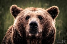 Bear looking right at me